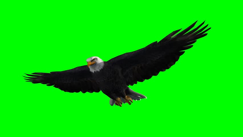 American Eagle in fly - seperated on green screen  | Shutterstock HD Video #5410961