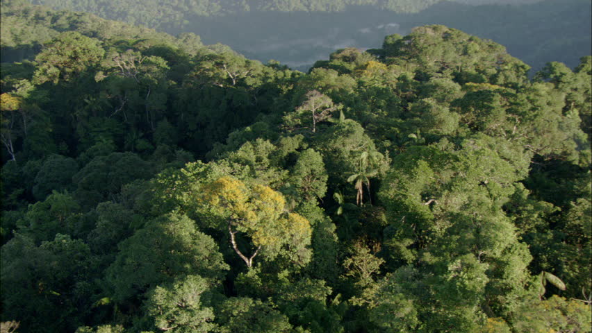 Aerial shot of a tropical rainforest. - HD stock video clip