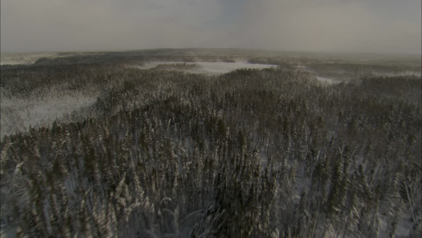 Arctic Tundra Forest. Aerial footage of the arctic tundra and a vast forest filled with snow covered trees.