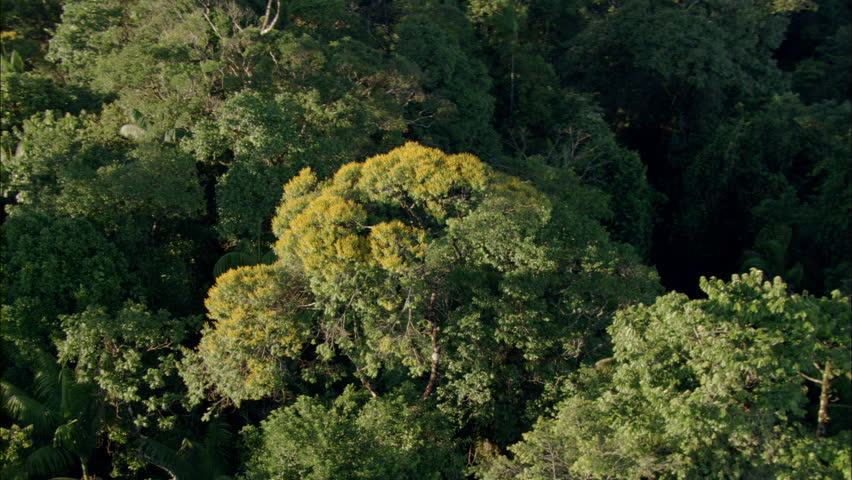 Aerial shot of a tropical rainforest. - HD stock footage clip