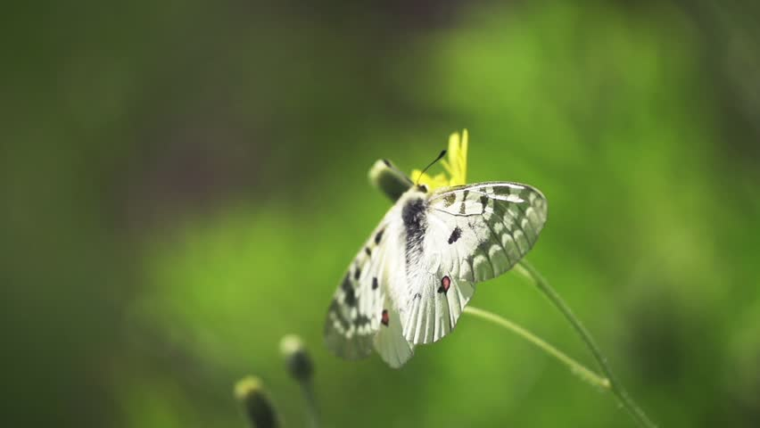 Butterfly flying away in super slow-motion | Shutterstock HD Video #5445062