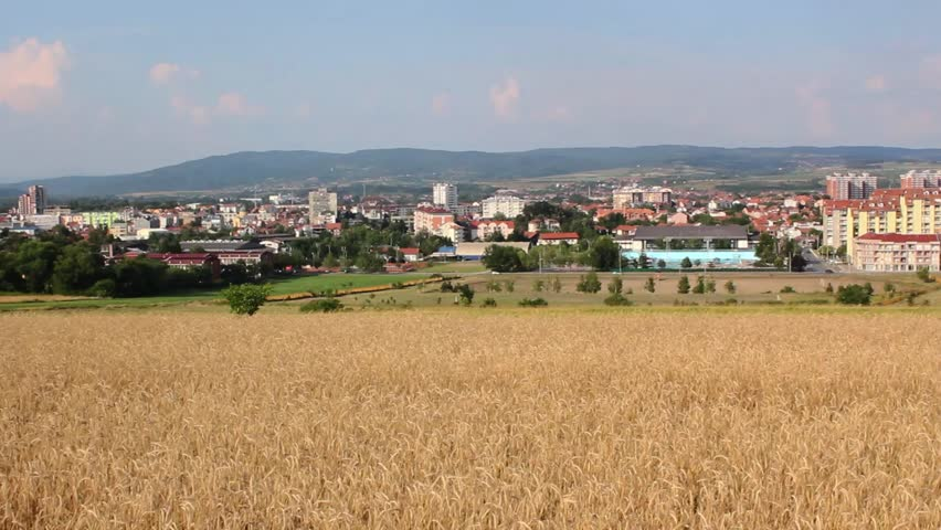 Wheat field waving on the wind,crane shot,panoramic view of city, tilt down in to the wheat, wide angle shot, - HD stock video clip