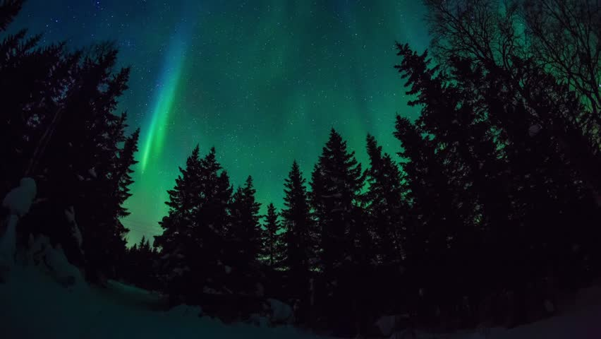 Aurora borealis dancing upon a pine forest in norway #5583824