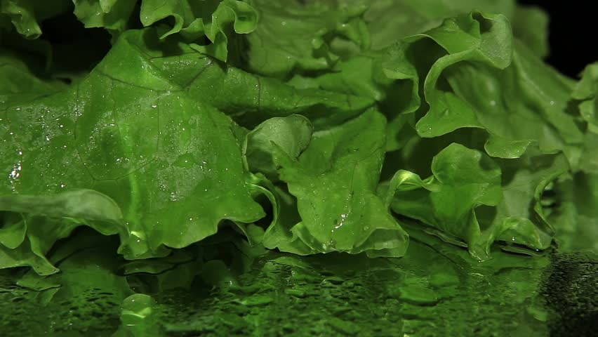 Green lettuce on black background close-up dolly shot | Shutterstock HD Video #5649425