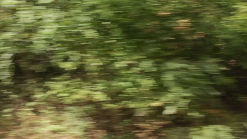 hd fast moving forest - photo #17