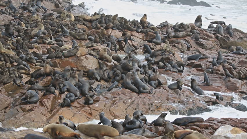 Group of sea lions over the rocks, atlantic ocean