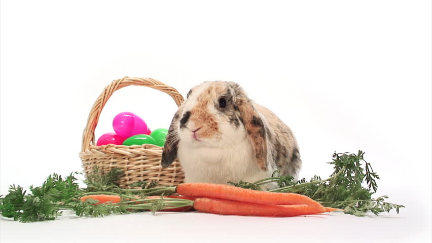 bunny rabbit sniffing around - photo #27