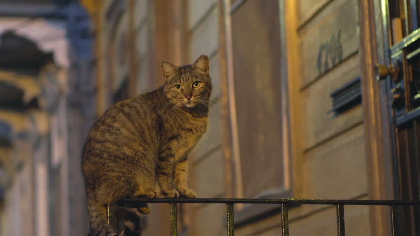 Cat sitting on front porch railing at night - HD stock video clip
