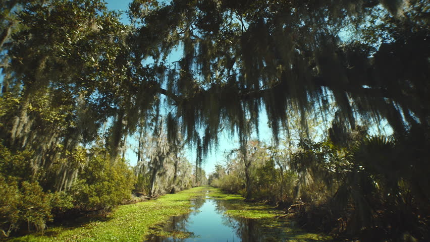 NEW ORLEANS - MARCH 10: 4 different Bayou swamp shots of the surroundings taken from a boat with a tree covering the way and leaves above the camera. - HD stock footage clip