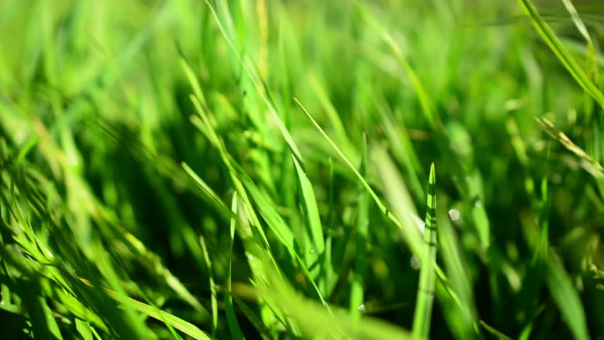 Green Grass Dolly 31 L Circular Waterdrops Slow Motion - HD stock video clip