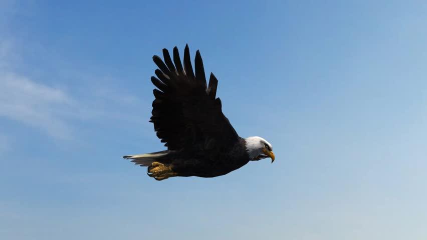 Bald Eagle Flight Close-Up tracking shot | Shutterstock HD Video #5993234