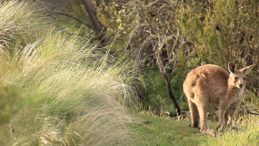 australia nature 1920x1440 hd - photo #43