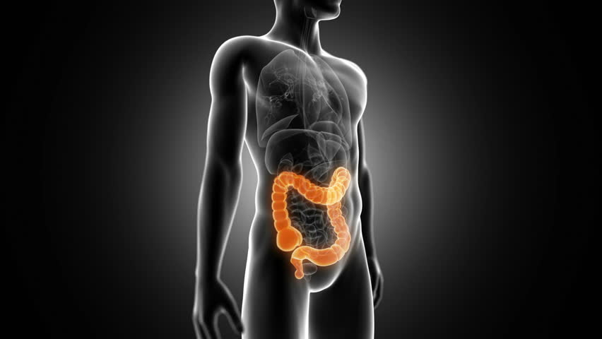 rotational animation showing the male colon - HD stock footage clip