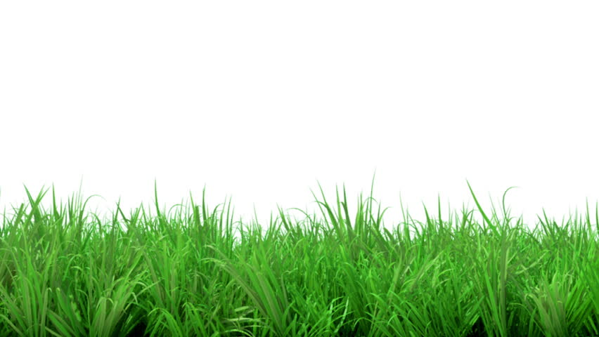 gorgeous animated green grass summer isolated on white