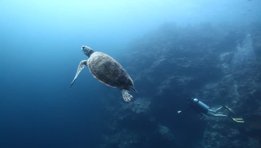 <b>Turtle Swimming Underwater Among</b> Coral Reef Stock Photo 124687285 ...