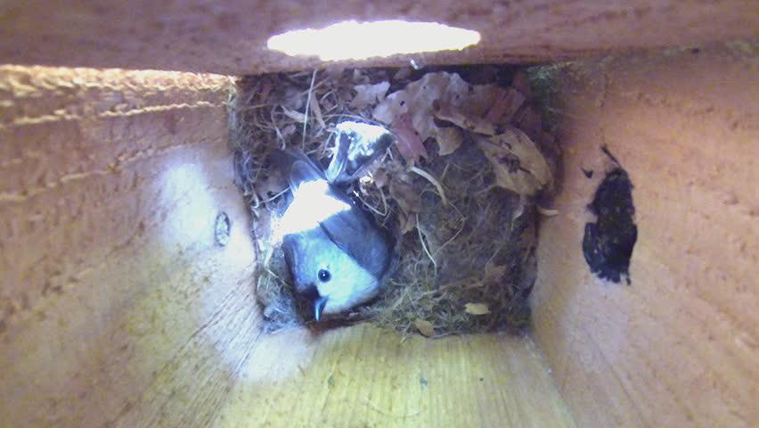nature animals 2 1080p hd video
