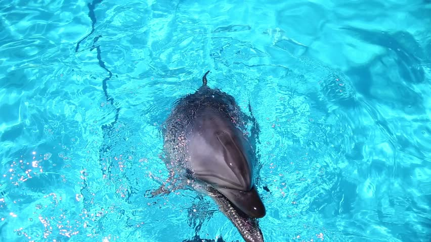 Dolphins are playing with water in the pool.