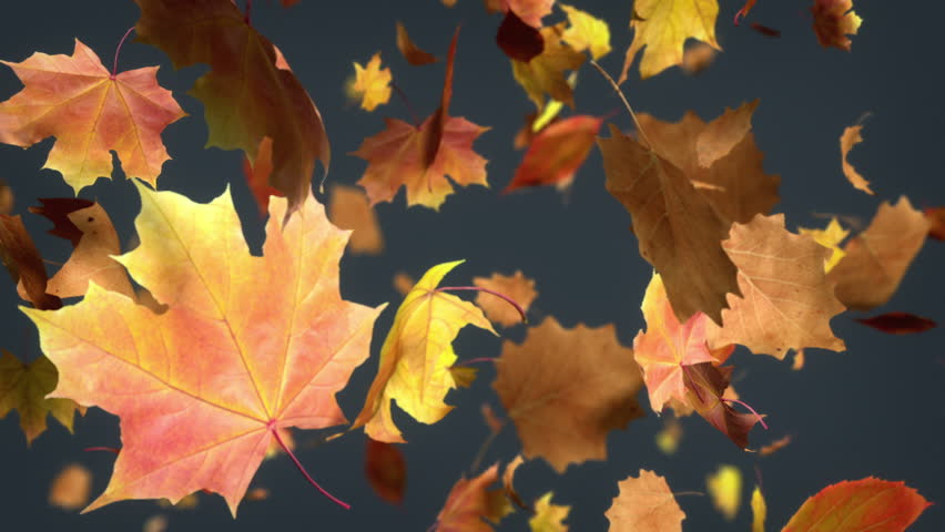 Falling Leaf Loopable Background. High Quality Animated ...