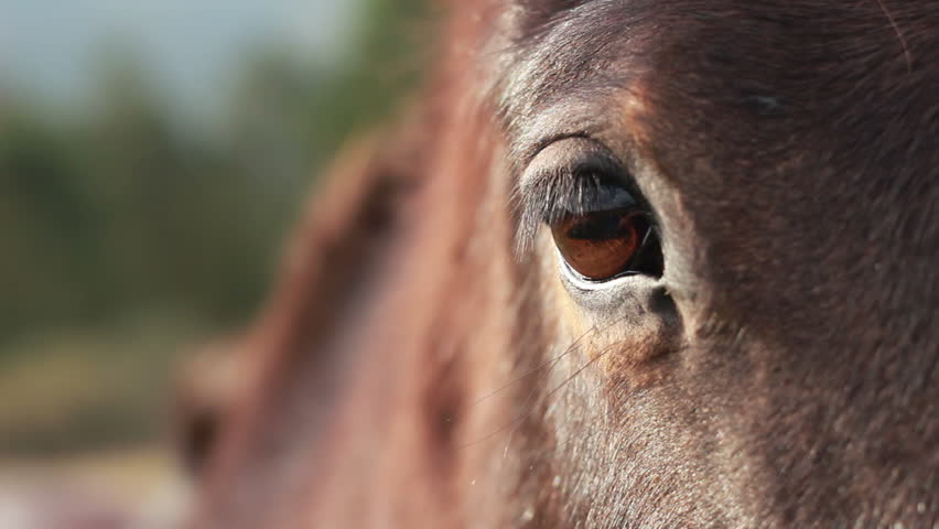 Hd wallpaper london - Horse Eye Footage Stock Clips