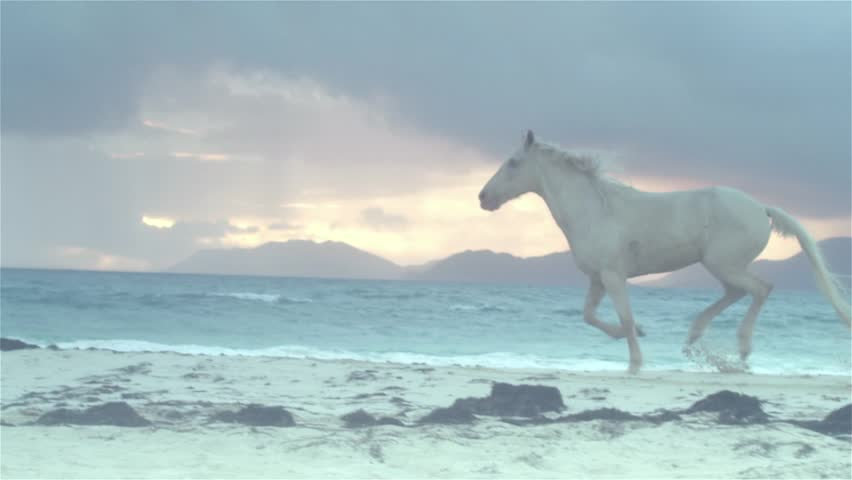 Horse running on beach  5
