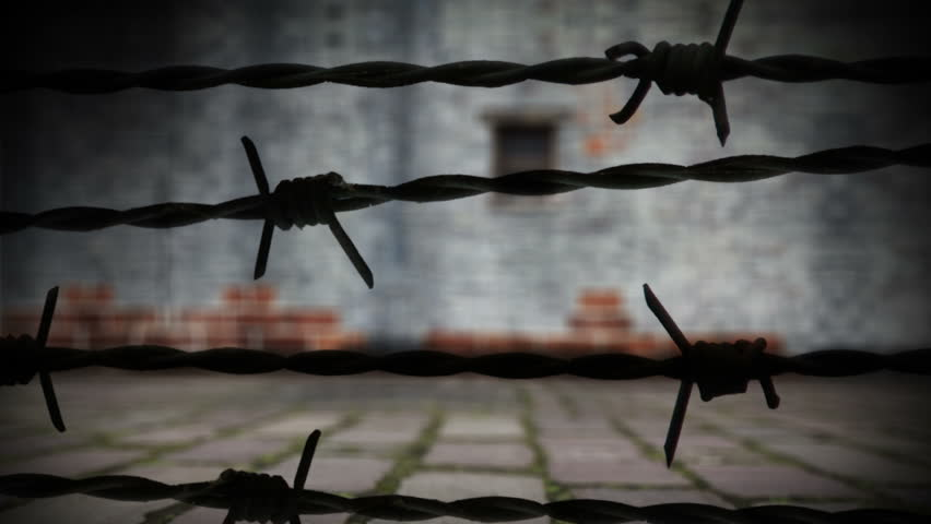The bird of peace with barbed wire and prison wall. Concept animation.