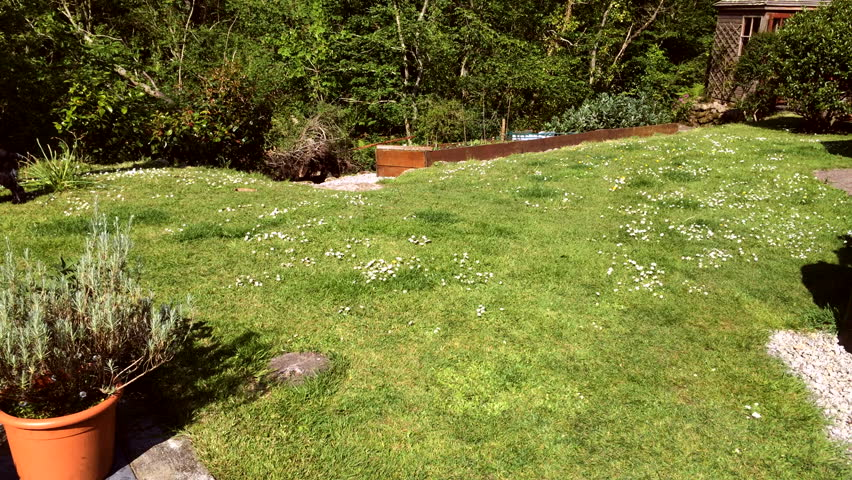 Time lapse high speed mowing a green garden lawn covered in daisies with a rotary petrol powered mower.