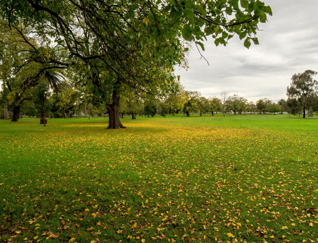 MELBOURNE- MAY 26: autumn fall, walking in the park of Melbourne, AUSTRALIA MAY 26, 2012 (Hyper Lapse or walk lapse)