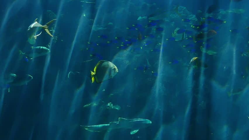 Angry Shark. Underwater Background. Animated Cartoon ...
