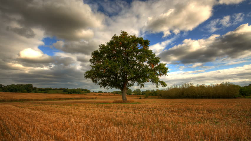 Heavy clouds passing over lonely tree, hd motion control time lapse clip, high dynamic range imaging