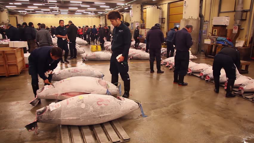 TOKYO, JAPAN - CIRCA APRIL 2014: People, men inspecting the frozen fish at the tuna auction. Tsukiji fish market, the largest wholesale seafood market in the world circa April 2014 in Tokyo, Japan - HD stock video clip