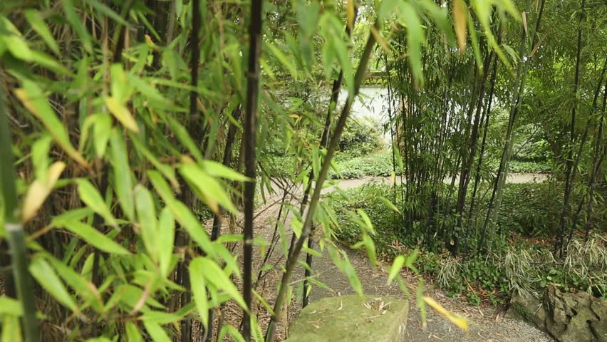 Bamboo Path dolly shot. A dolly shot of a path in a green bamboo forest garden. - HD stock footage clip