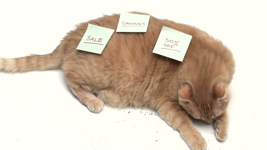 Cat covered in post it notes SALE - HD stock video clip