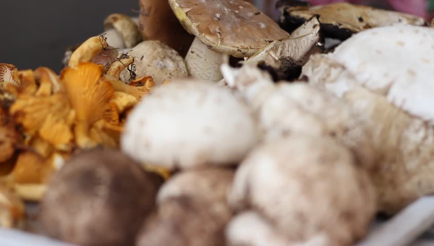 Changing focus to a pile of forest edible mushrooms.