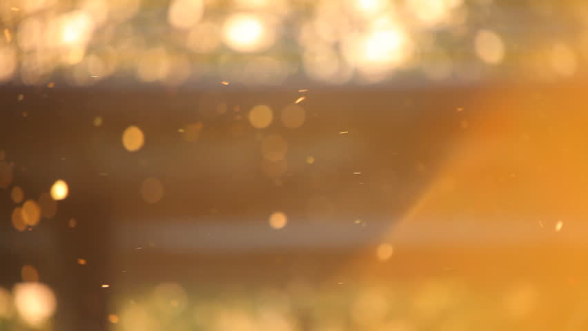 Pollen out focus on spring sunset 01 cut  - HD stock video clip