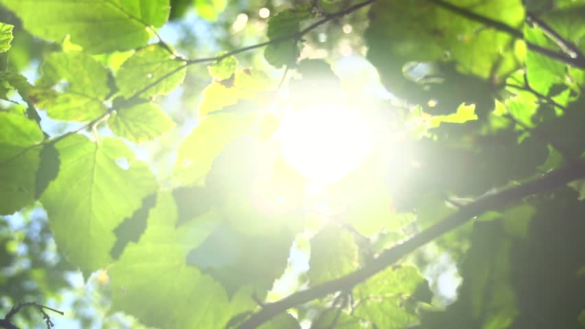 Nature background. Beautiful Sun shine through the blowing on wind tree green leaves. Blurred abstract bokeh with sun flare. Sunlight. Sunflare. Slow motion 240 fps. High Speed camera shot 1080p - HD stock video clip