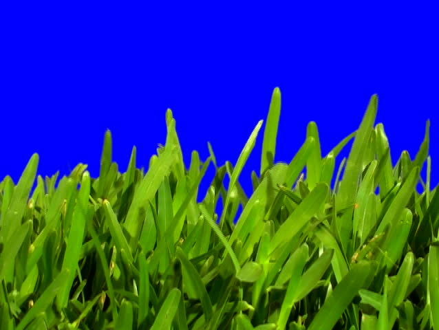 Grass blue screen V3 - NTSC - SD stock footage clip