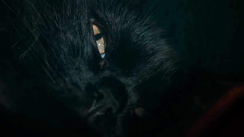Closeup shot of a black cat's eye