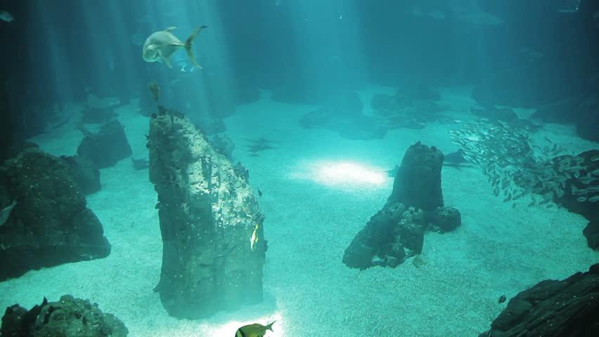 Ocean sunfish underwater - HD stock footage clip