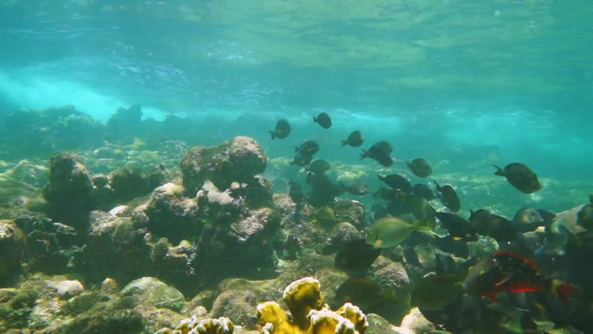 Sea Bottom Of The Sea Fish Seabed Sea: Shoal Of Small Fish Swimming Above Grassy Seabed With Few