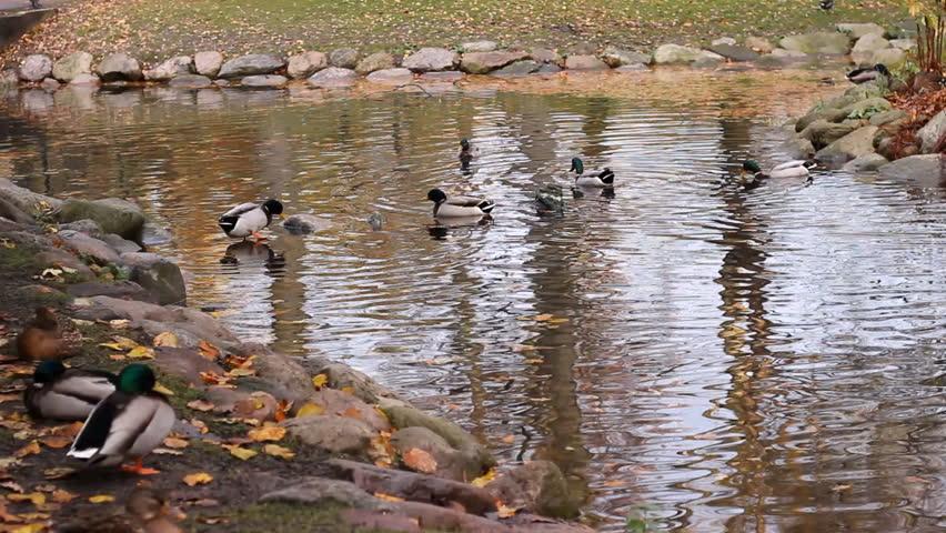 1920x1080 cabin lake ducks - photo #37