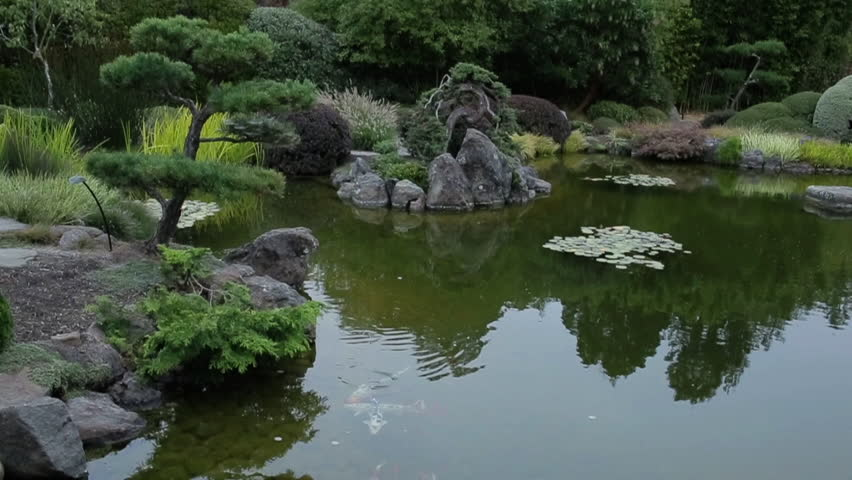 Japanese garden with koi fishes swimming in lake stock for Japanese garden fish