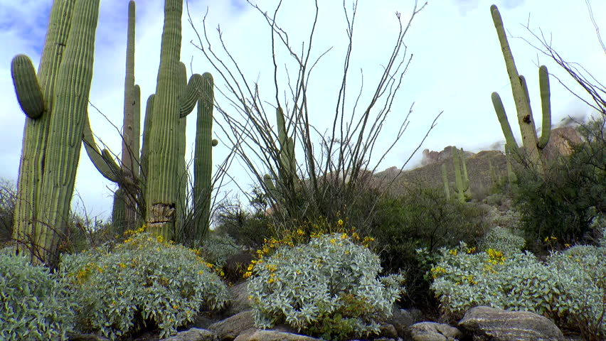 cactus Arizona desert landscape to city of Tucson in background HD Wide Wallpaper for Widescreen