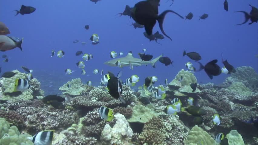 Fish swimming underwater - HD stock video clip