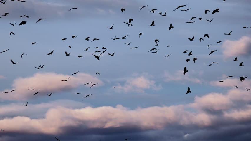 Flock Of Birds Flying In Beautiful Sunlight Sky 4K