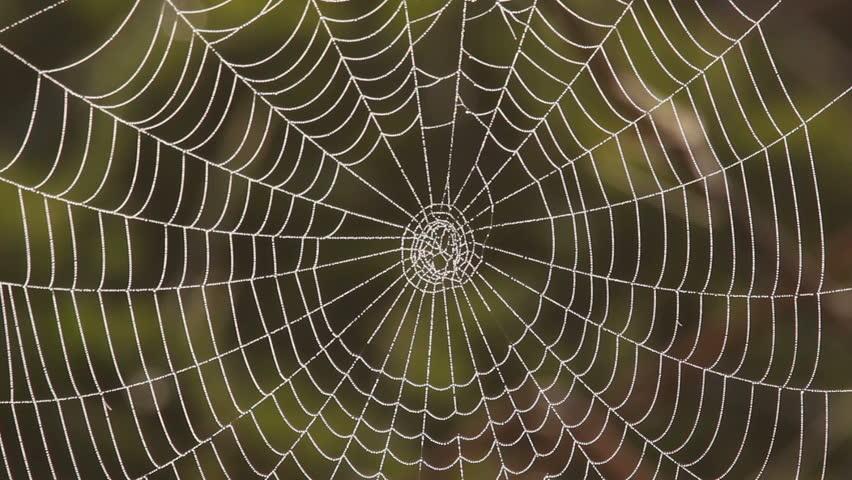 Web. A close up.