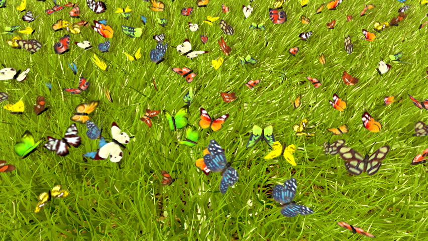 Spring Butterfly : 3D animation - HD stock video clip