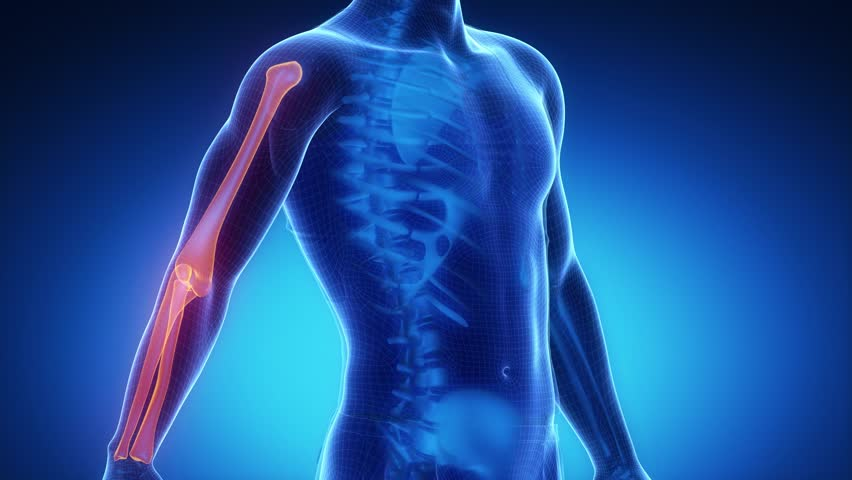 ELBOW joint skeleton x-ray scan in blue - 4K stock video clip