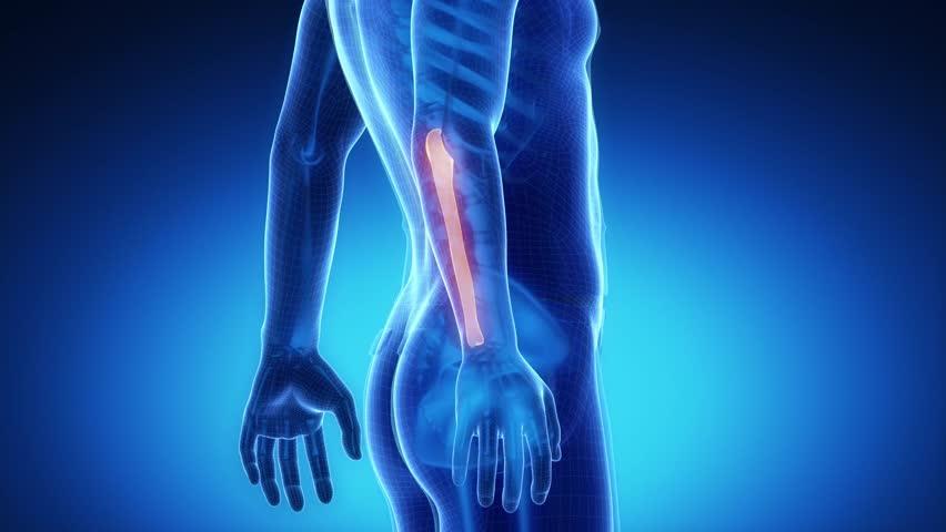 ULNA bone skeleton x-ray scan in blue - 4K stock video clip