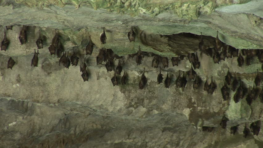 Bats in a cave in Lucayan National Park on Grand Bahama