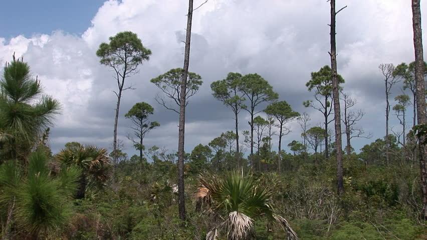Lucayan National Park on Grand Bahama